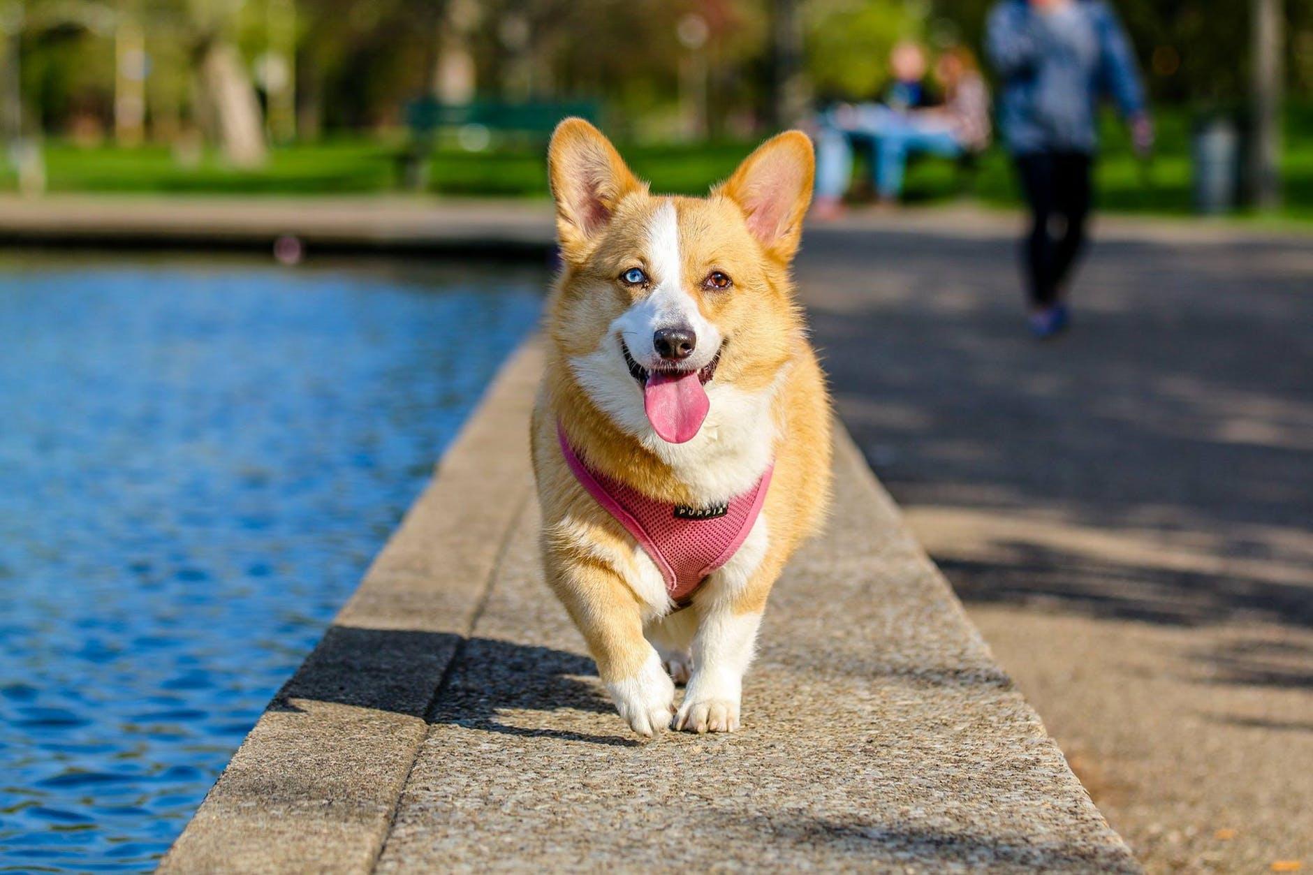 photographer animal photography dog