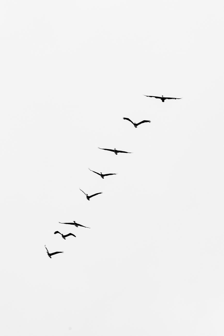 Random Rants: Why Can BirdsFly?